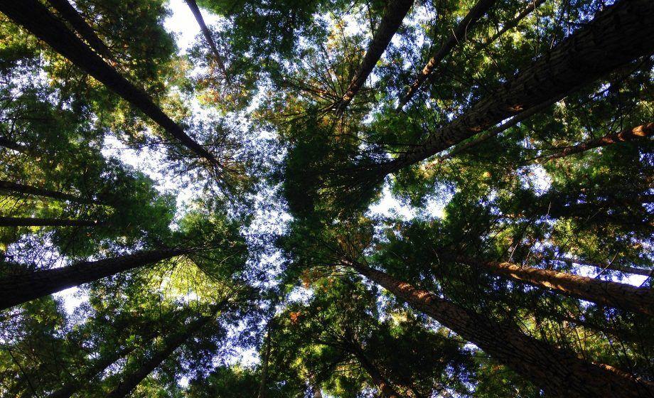 Épinglé par Agnès de Meaux sur TREES Arbre