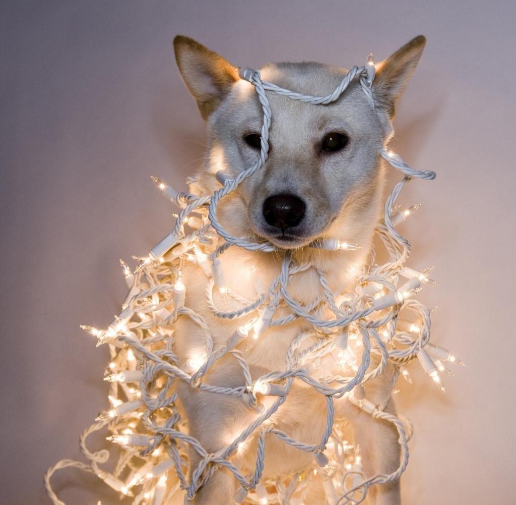 Trend Lichterketten Sind Die Jeans Unter Den Weihnachtsdeko Artikeln Mit Bildern Lichterkette Hund Und Katze Licht