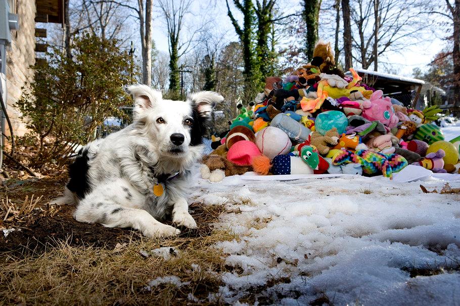 Tres factores que prueban cómo tu perro te entiende más de lo que imaginas - Animal Planet