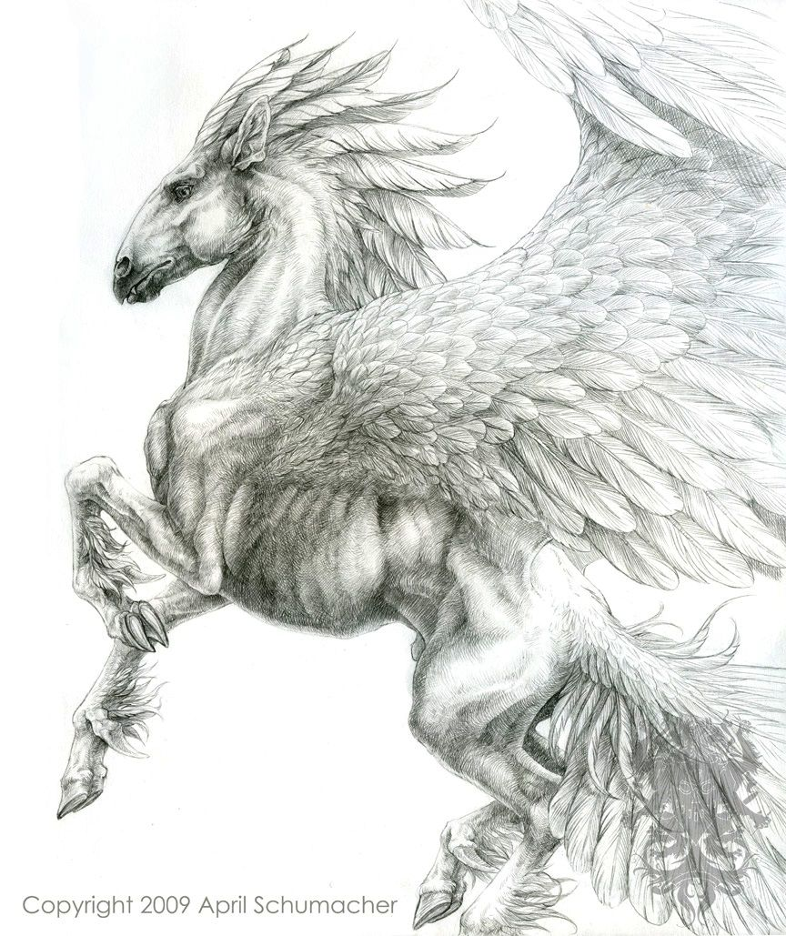 Uncategorized Drawings Of Pegasus very nice depiction of pegasus calligraphy and illumination pegasus