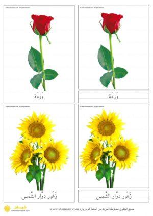 بطاقات الأزهار بصور فوتوغرافية بطاقات المونتسوري المكونة من ثلاثة أجزاء 2 Plants