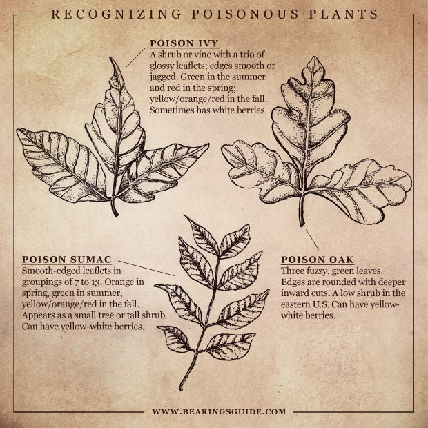 Today's blog: Poisonous Plants hand-drawn illustrated diagram and infographic for identifying poisonous plants in the South, http://russellshawblog.com/?p=1849#