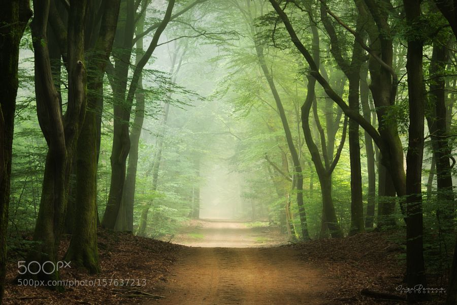 Let The Light Guide You. by IngeBovens. @go4fotos
