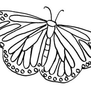 Painted Lady Butterfly Illustration Coloring Page Butterfly
