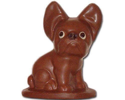 Chocolate French Bulldog Chocolate French Bulldog