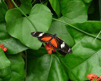 Butterfly Garden | Victoria Butterfly Gardens   Victoria Butterfly World