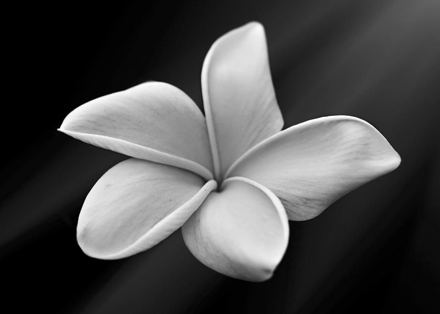 Plumeria frangipani flowers water wave tattoo Tattoos t