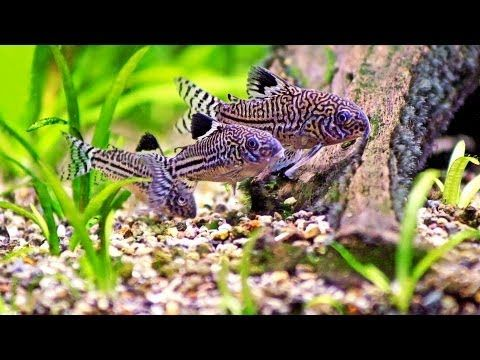 How To Clean A Fish Tank Without Removing Fish Aquarium
