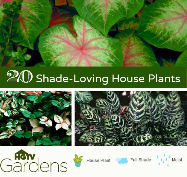List of 20 common indoor house plants that thrive in full shade. Mix plants in a container garden. HGTVGardens