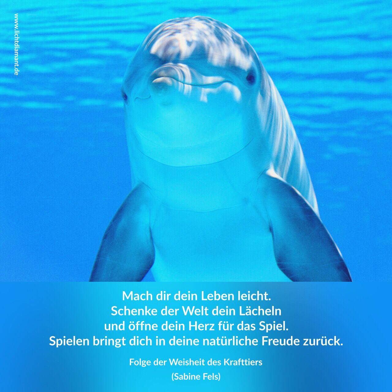 Delfin | LICHTDIAMANT   Krafttiere   Folge der Weisheit der Krafttiere