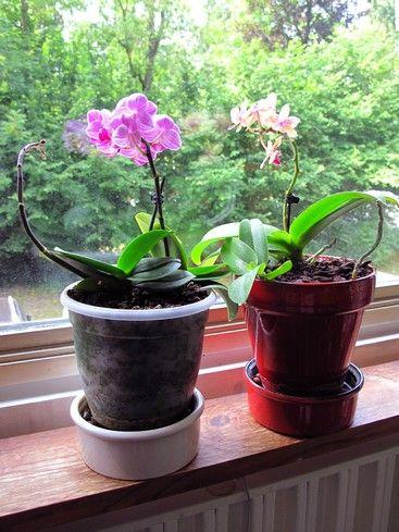 entretenir une orchid e miniature guide pratique art floral orchid pot and orchid plants. Black Bedroom Furniture Sets. Home Design Ideas