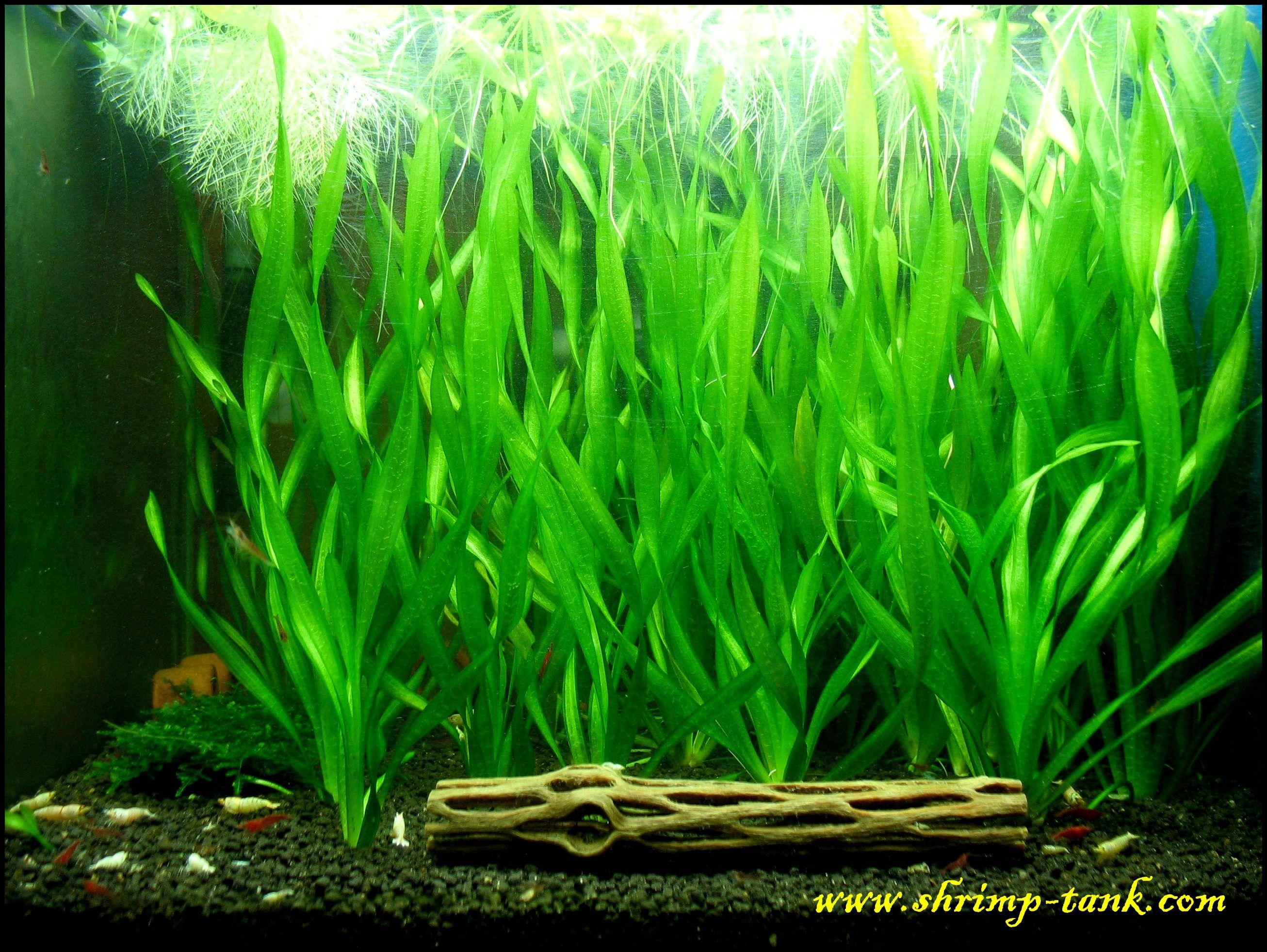 Tropical Aquarium Plants