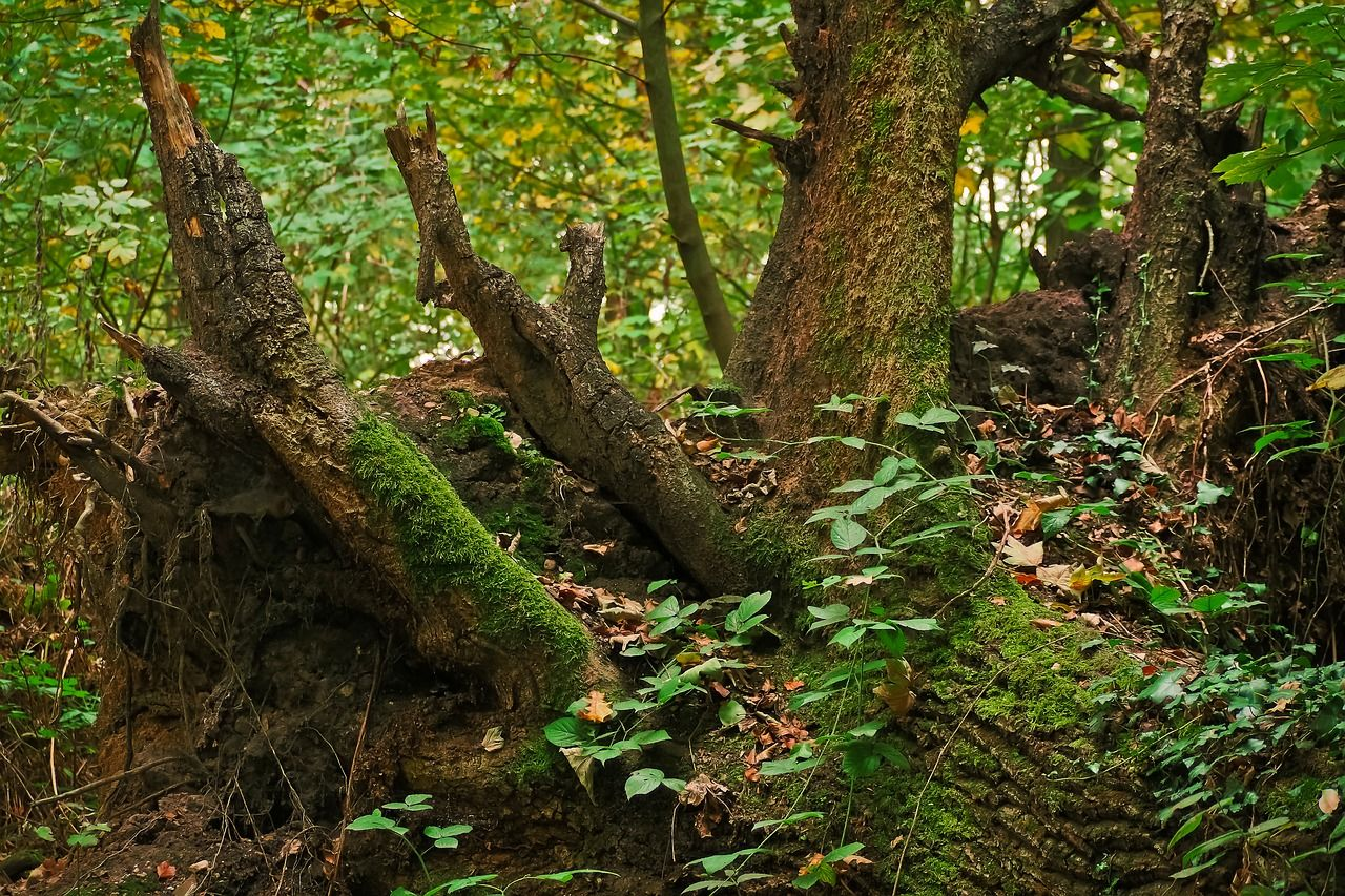 Forest Tree Tree Stump Nature Forest Wood Forest Tree Treestump Nature Forest Wood Tree Tree Stump Nature
