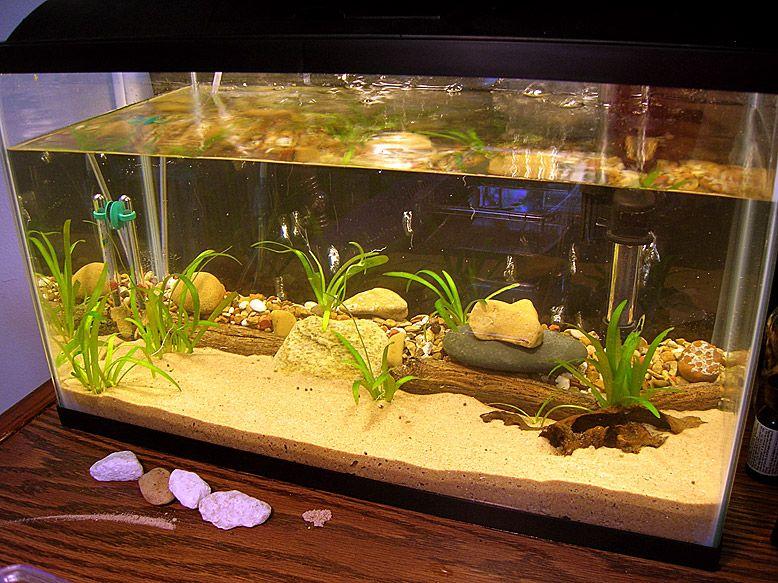 The Triops Forum Not Spam Actually A New Member Animal Habitats Aquarium Nano Aquarium