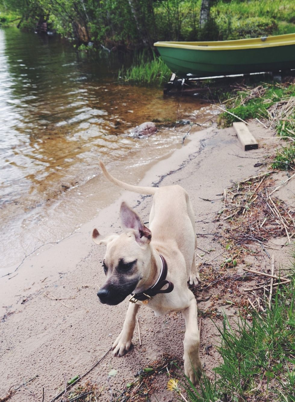 lainahöyhenissä - Blogi | Lily.fi