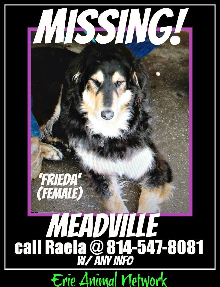 Missing Meadville Pa Losing A Dog Love Pet Losing A Pet
