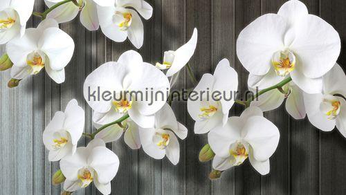 White orchids fotobehang 1015-VE M Bloemen - Planten ...