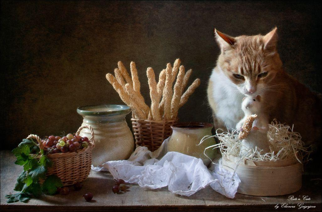 Кошка шотландец гранд мастер йода описание фото что