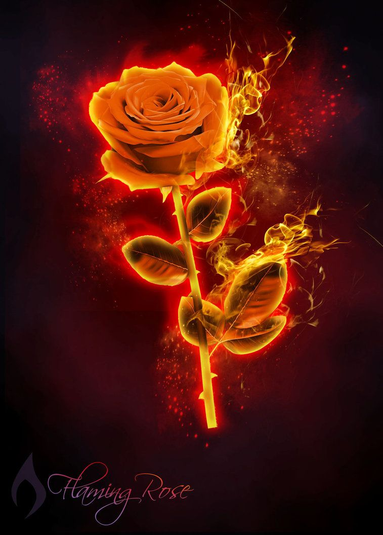 Pin By Rach C On Rose Red Roses Wallpaper Roses Drawing Rose On Fire