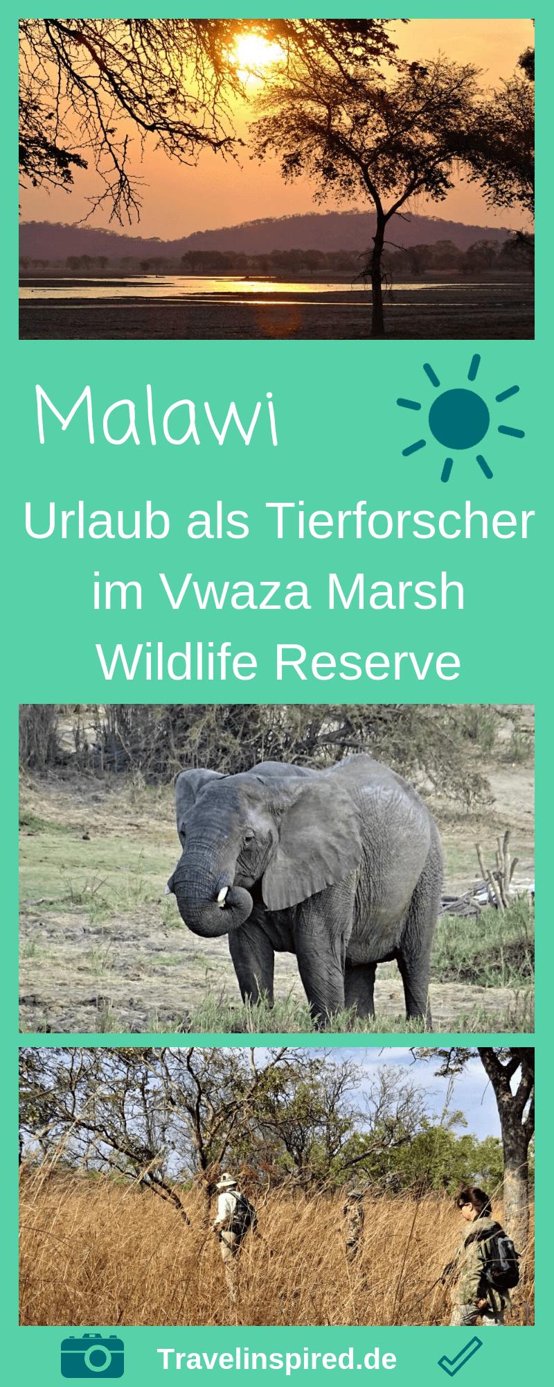 Urlaub Als Tierforscherin In Malawi Travelinspired Afrika Reisen Abenteuerreisen Reisen