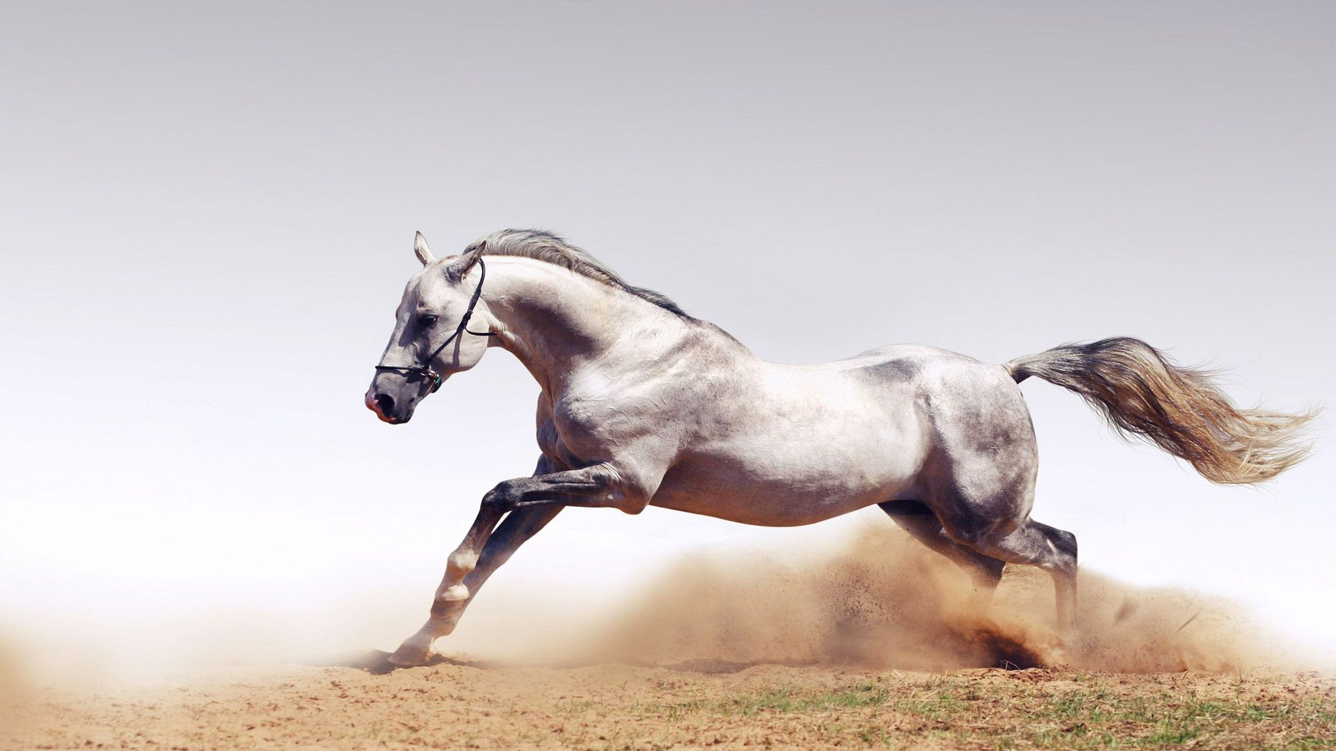 Must see Wallpaper Horse Stunning - 42c12c713676f32f7d455ca9c5f0fa5a  Collection_465140.jpg