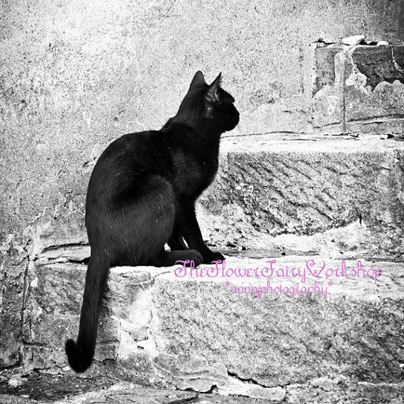 Black Cat Photography Pet Photography By Flowerfairyworkshop Crafty Cats And Artful Felines Cats Cat Photography Animal Photography