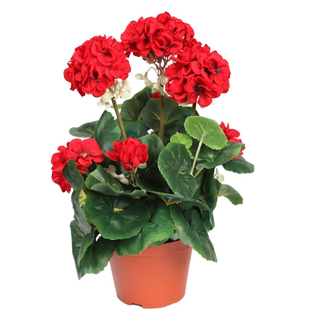 MACETA FLOR GERANIO Buscar con Google plantas que florecen todo