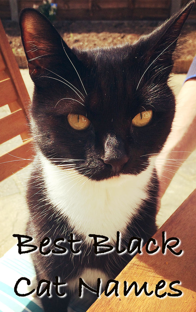 Black Cat Names 250 Of The Best Names For Your New Kitten Cat Names Names For Black Cats Kitten Names