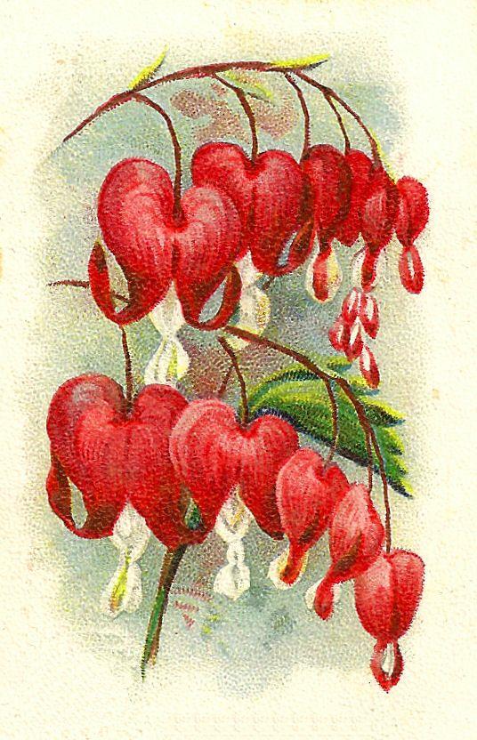 Digital Flower Images Clip Art Bleeding Hearts Orchid Illustrations Vintage Flower Tattoo Flower Drawing Flower Illustration