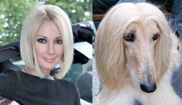 dogs that look like things | Dogs That Unexpectedly Look Like Something Else (25 photos)