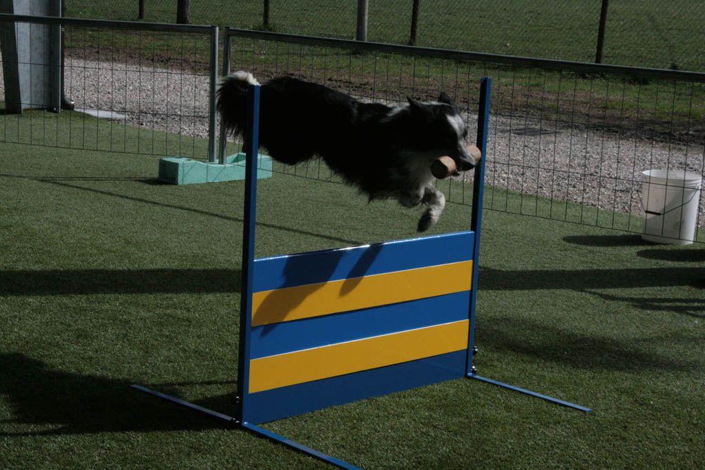 Dog City Addestramento Cani Soliera Carpi Modena Agility Dog