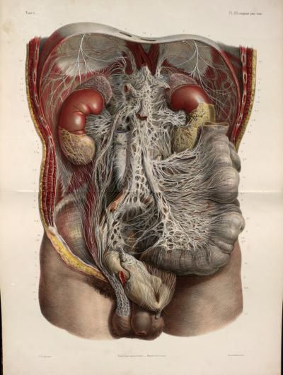 نتيجة بحث الصور عن traité complet de l'anatomie de l'homme comprenant la médecine opératoire