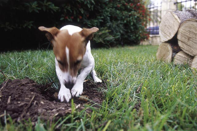 How to Keep Dogs Out of Your Yard | Dogs, Dog yard, Dogs waste