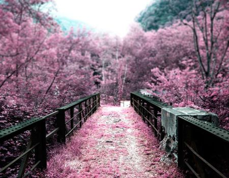 Surreal pink bridge.