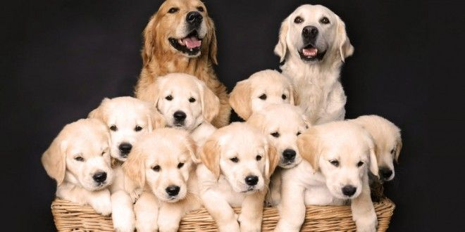 15 Adorable And Happy Dog Parents Posing With Their Puppies