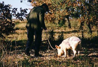 Truffle Hunting Truffels Kroatie