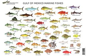 Gulf Of Mexico Marine Life Good Eatin Fish Chart Salt Water Fishing Salt Water Fish