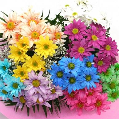 Google Image Result for http://www.lebouquet.com/userfiles/image/daisies-flowers-care.jpg