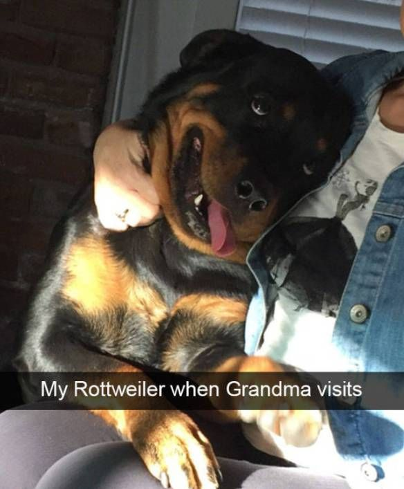 Funny Dog Snapchat Selfie Captions Selfie Captions - 21 hilarious snapchats that made our day instantly better 6 cracked me up