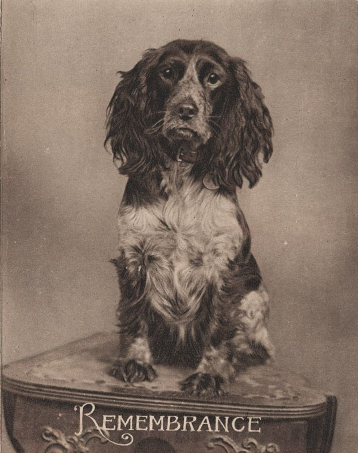 Victorian Vignettes: Sweet dog - 'Remembrance' card