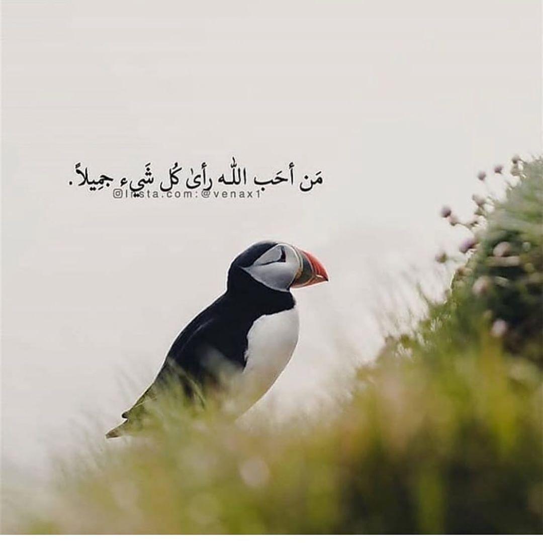 86 Likes 0 Comments ام عدنان Om Adnan40 On Instagram Instagram Instagram Posts Pics