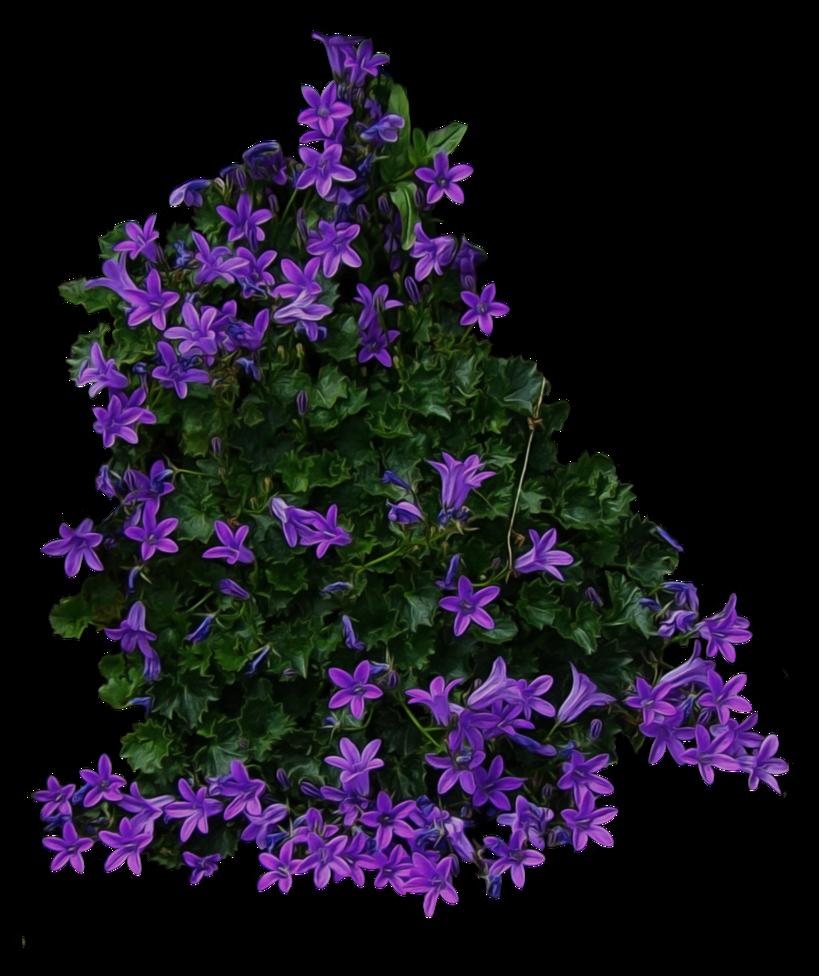 Purple Flowery Bush Png By Aledjonesstocknart On Deviantart Purple Flowering Bush Purple Flowers Plants