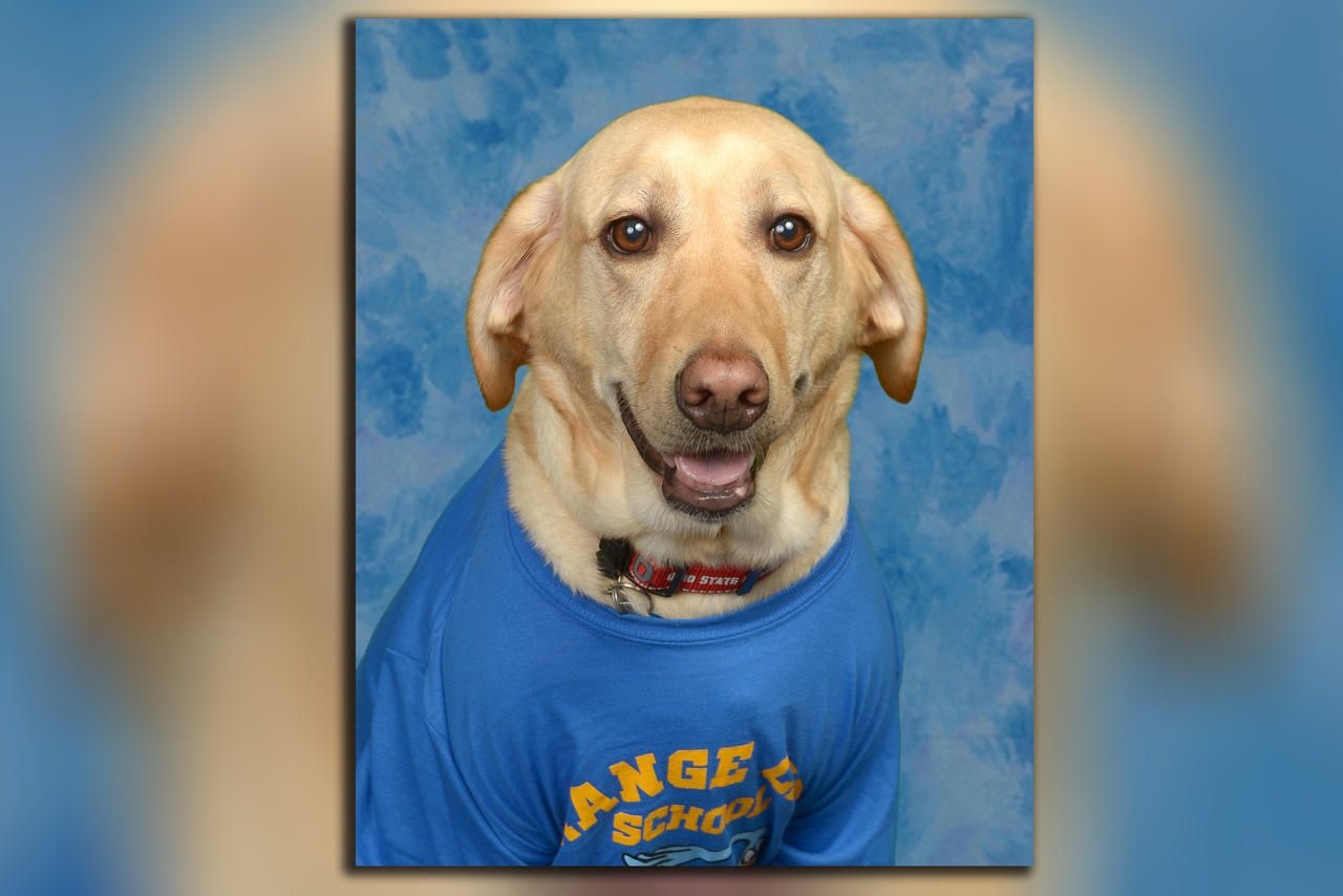 Beloved Service Dog Gets Picture In Florida Elementary School S