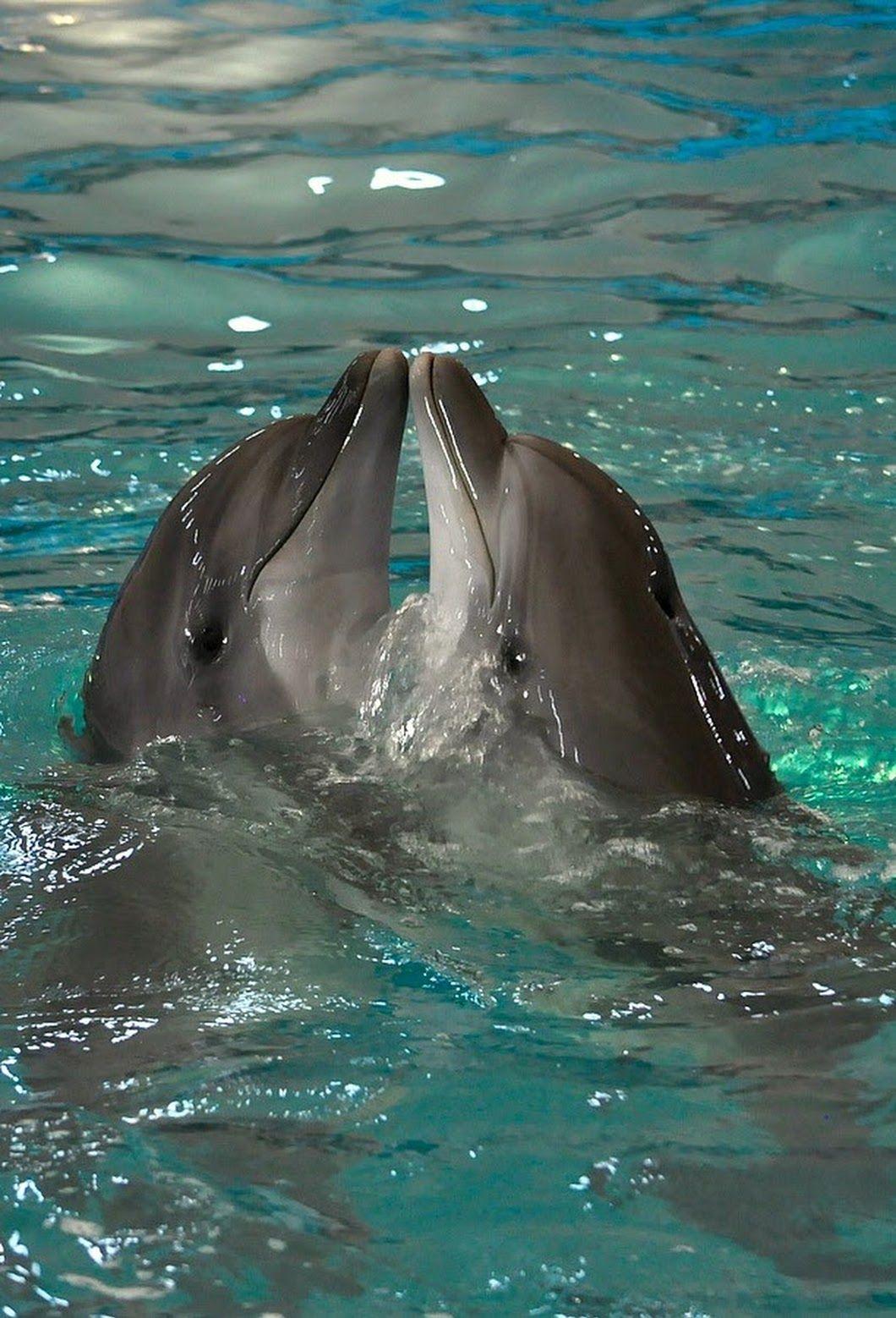 фото дельфин мерцающий интересом, присоседившись группе