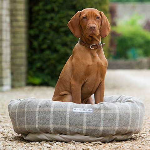 Gorgeous Vizsla Looking Regal On The Grey Tweed Dog Bed Www Dogghaus Co Uk Dogs Donut Dog Bed Dog Carrier
