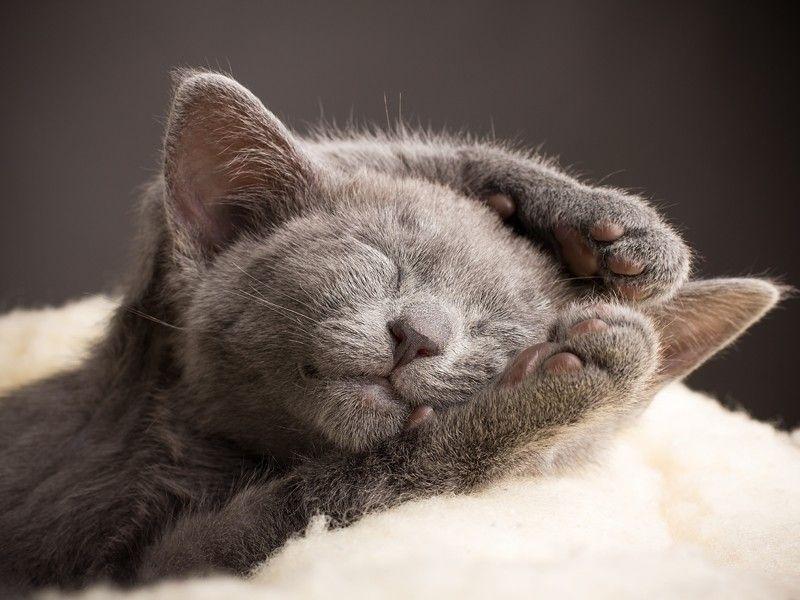 Katzchen Beim Schlafen Die Mudigkeit Hat Gesiegt Seite 5 Cute Animals Cats Cute Cats