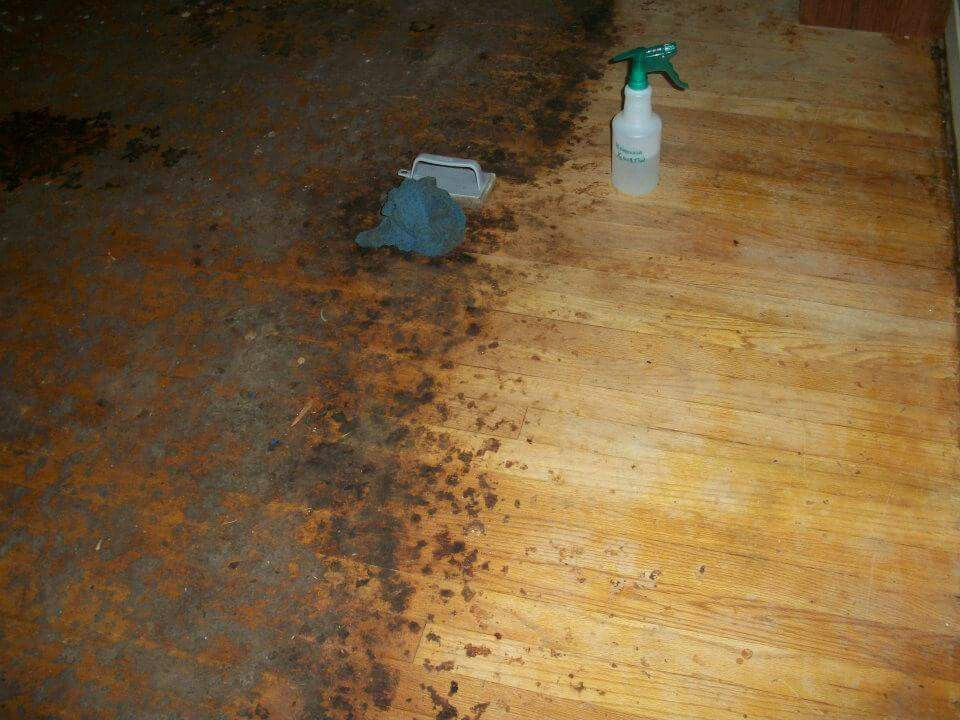 To Remove Years Worth Of Carpet Glue And Ground In Dirt On A Hardwood Floor  Before
