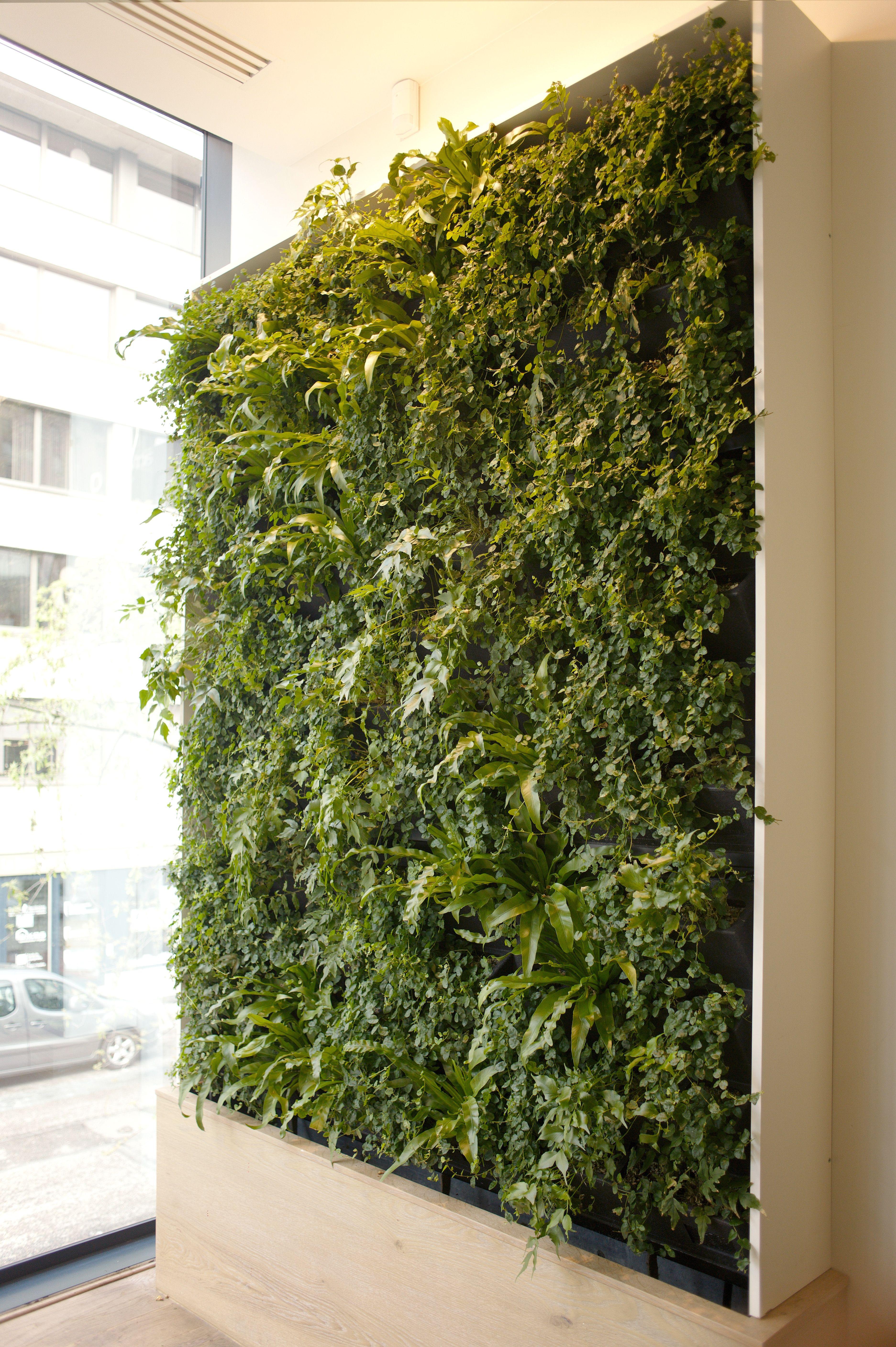 interior green wall vertiss textures pinterest mur vegetal mur v g tal int rieur et vegetal. Black Bedroom Furniture Sets. Home Design Ideas