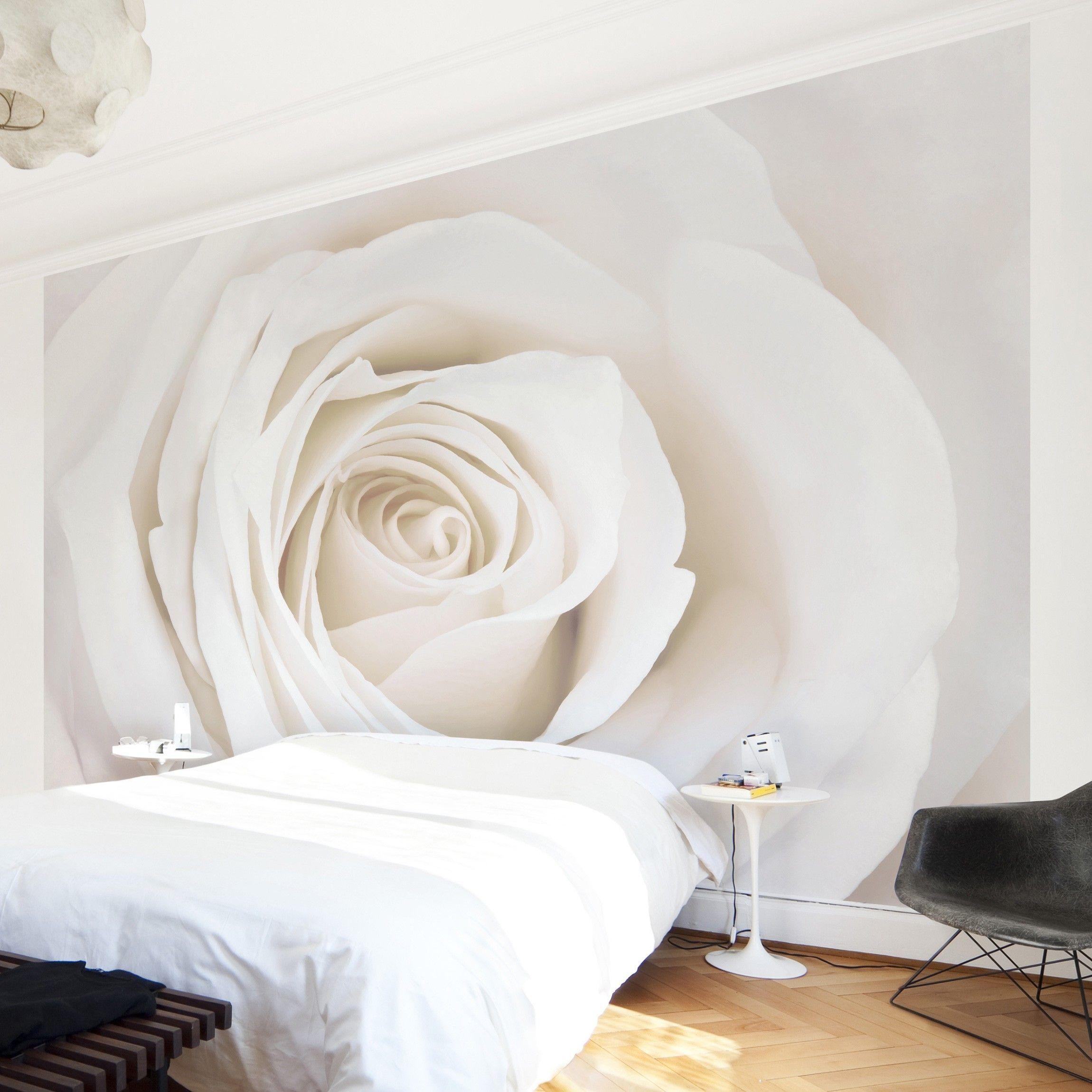 Rosentapete Fototapete Rosen Pretty White Rose Blumen