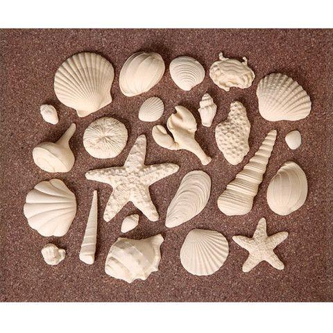 Ivory Sea Shells | CaljavaOnline